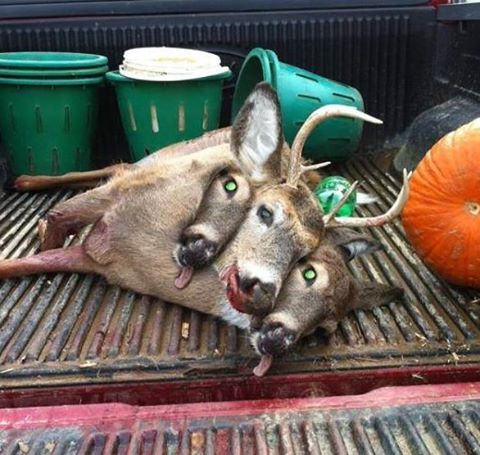 3 Headed Deer Fishing Hunting Camo Pinterest Deer