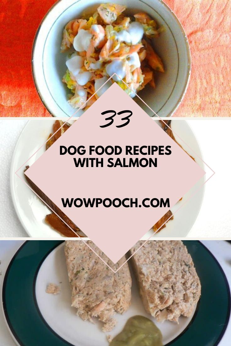 american journey puppy food salmon