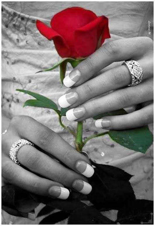 Czerwona Róża Róże I Kwiaty