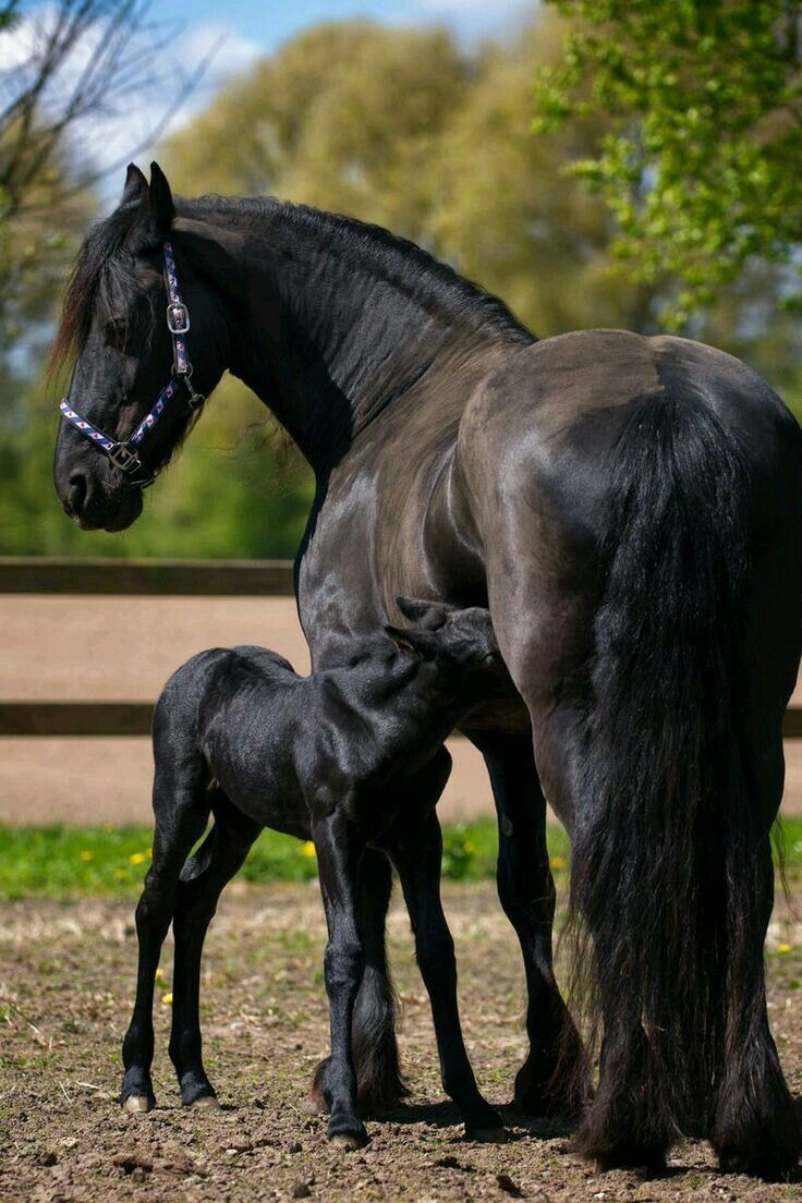 Beautiful horse and foal