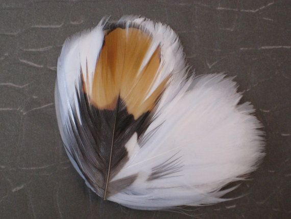 White beige gray and brown feather hair by PurpleCatStudios, $17.00
