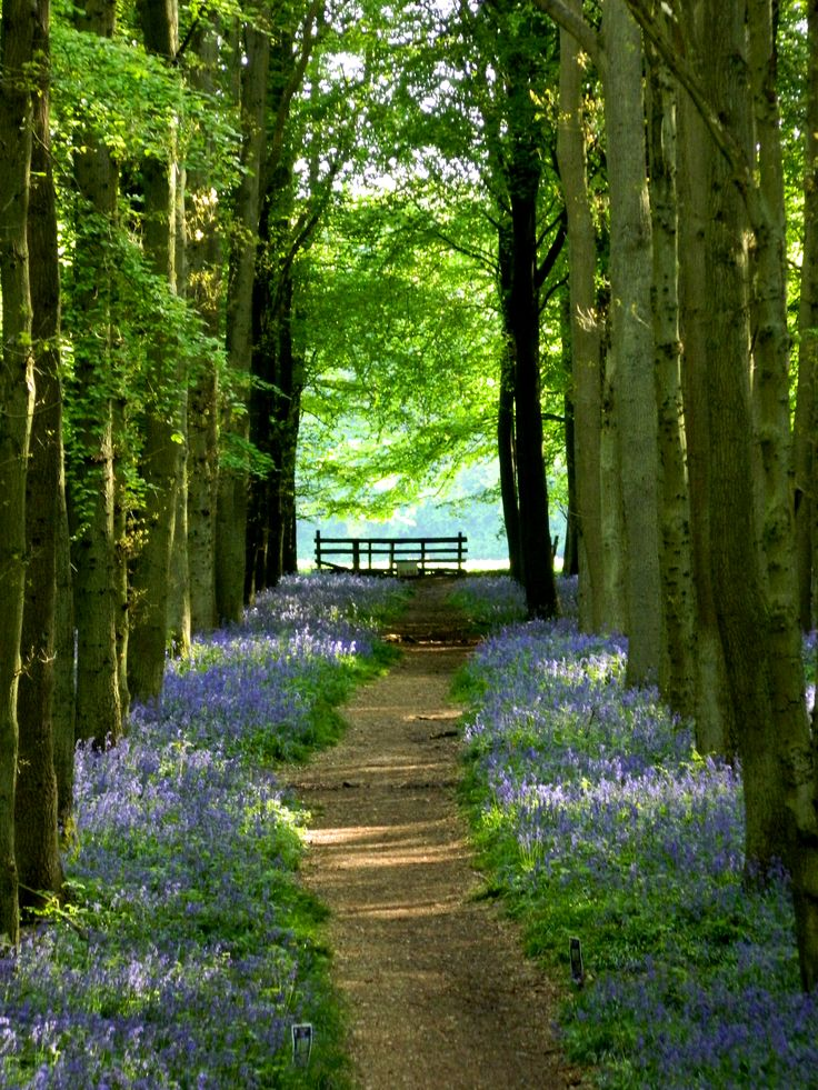 Dockey Wood, the Chilterns in Hertfordshire Great