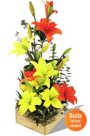 Breathtaking    This stunning boxed arrangement of Asiatic Lilies is something spectacular. The amazing combination of orange and yellow is breathtaking in the true sense of the word!