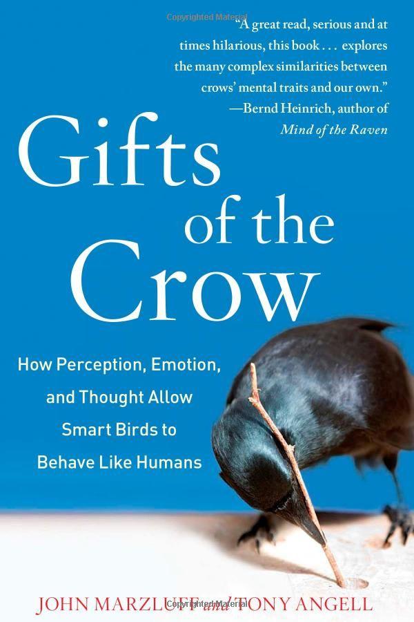 10 Really Weird Crow Facts - Aves Noir | Aves Noir