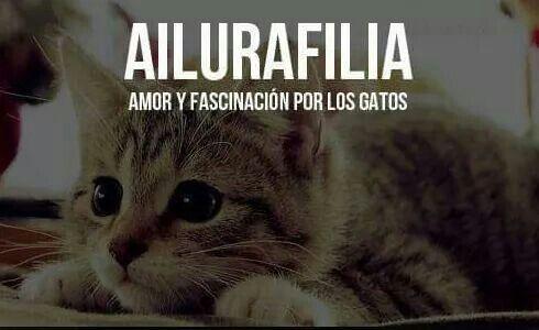 Mi Amor Por Los Gatos Pensamientos Frases Celebres Y Mucho Humor