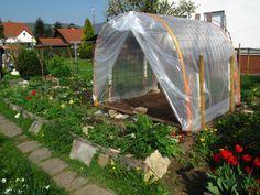 Le mildiou explications et Serre pour culture de tomates sous abri