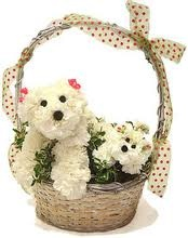 a basket of flower puppies