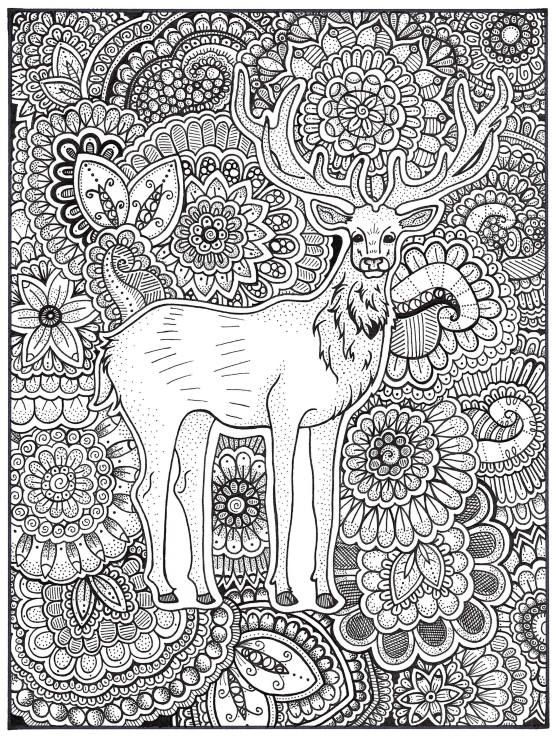 Stag Coloring Page, Coloring Book Pages, Printable Adult Coloring ...