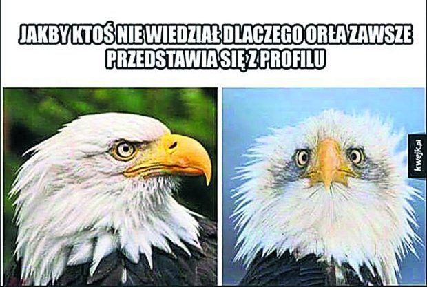 Ten internetowy mem rozśmieszył ostatnio Marka Raczkowskiego