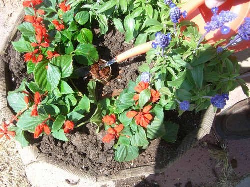 Successful Container Gardening--has some clever 'natural' soil ammendment, watering, and pest-control tips