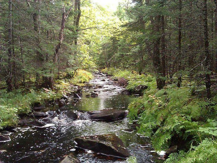 Avalon Wilderness Reserve