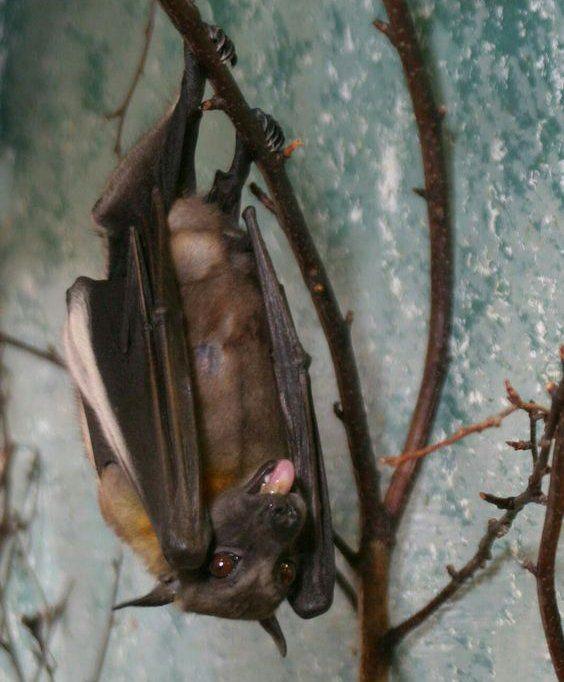Hanging out! Bat