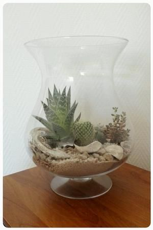 Cactus en vetplantjes in glazen vaas met wat steentjes en zand.  Welke.nl.