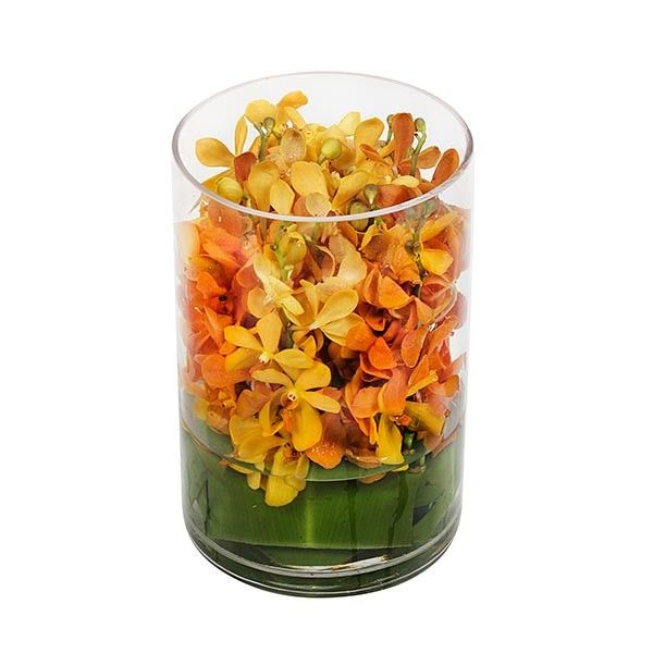 PlantShed.com | Exotic Mokaras | Flower Delivery NYC | Bring tropical vibes into your home with this stunning arrangement of orange mokara orchids.