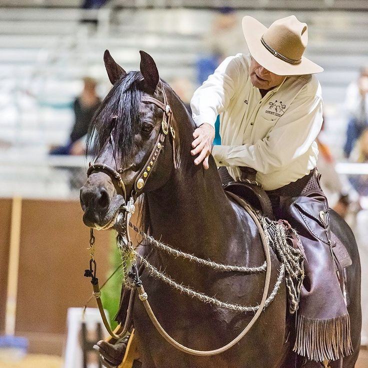 About horses naturally on pinterest horses dressage and paradise