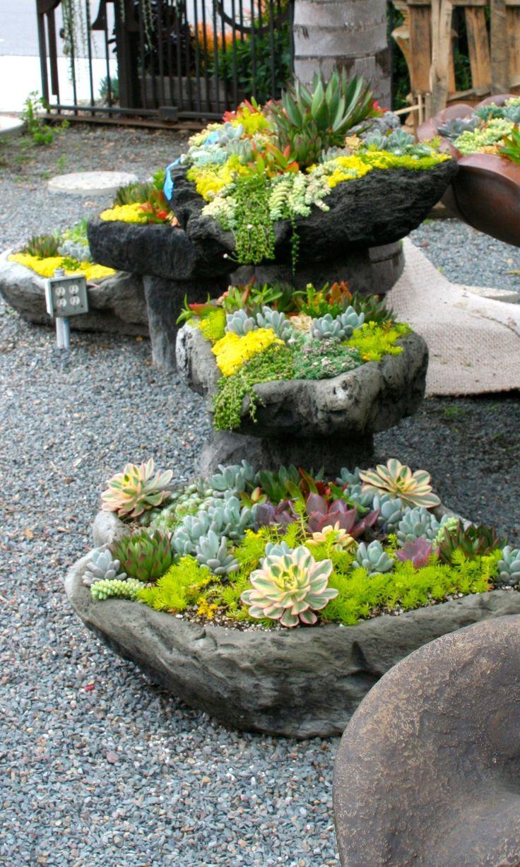 Using concave rocks as succulent planters.
