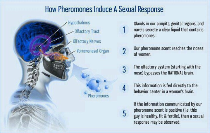 Pheromone   Pheromones, Pure romance consultant, Pheromone