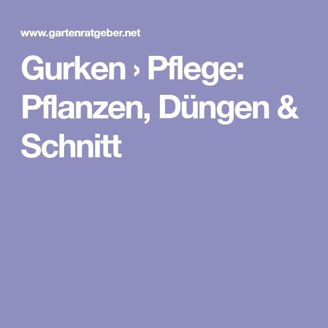Gurken › Pflege: Pflanzen, Düngen & Schnitt
