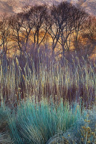 Early morning light illuminates this peaceful desert foliage scene in the Owen's Valley.