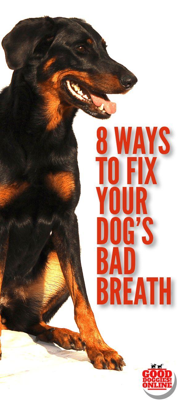 dog bad breath remedies