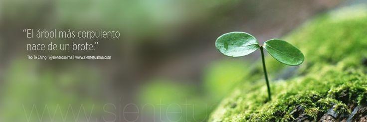 """""""El árbol más corpulento nace de un brote"""" Tao Te Ching   @sientetualma   Siente Tu Alma   www.sientetualma.com"""