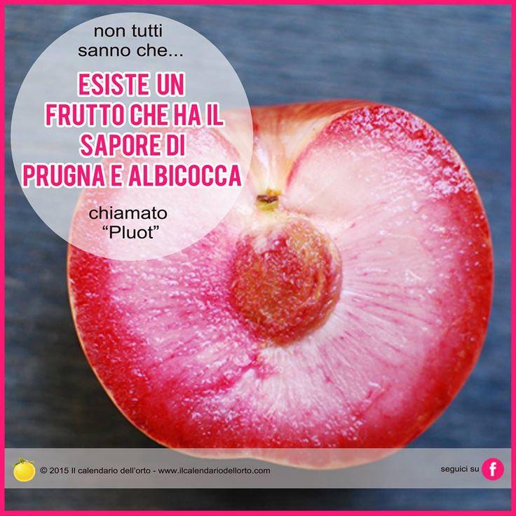 """Esiste un frutto che ha il sapore di prugna e albicocca chiamato """"Pluot"""""""