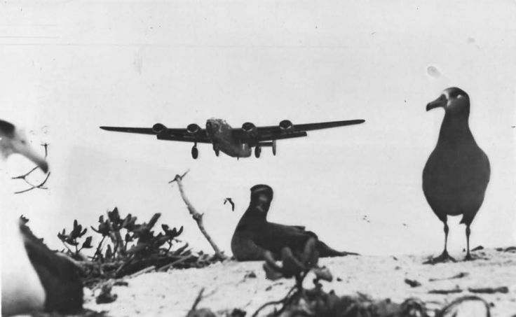 B-24 Liberator Comes in for Landing at Midway Island 1943