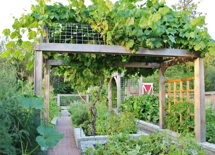 Best 25+ Grape Arbor Ideas On Pinterest
