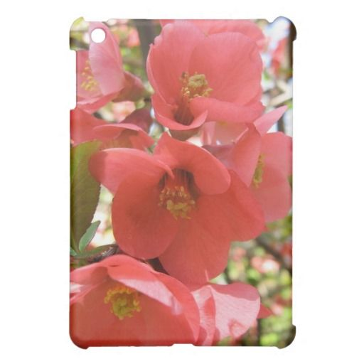 Quince Blossom iPad Mini Case. http://www.zazzle.com/quince_blossom_ipad_mini_case-256285680579678646