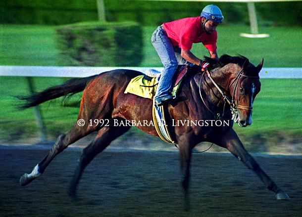 29 Best A P Indy Images On Pinterest Thoroughbred Horse