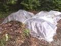 Cold Climate Gardening, HGTV