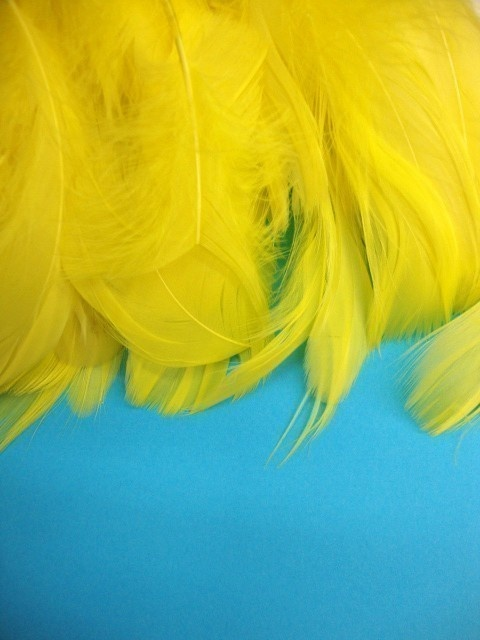 Yellow Feathers #SephoraColorWash: Feather Earrings, Feathers Sephoracolorwash, Yellow Feathers, Sephora Color Wash