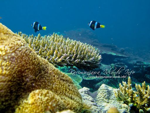Karimunjawa Islands   Underwater World