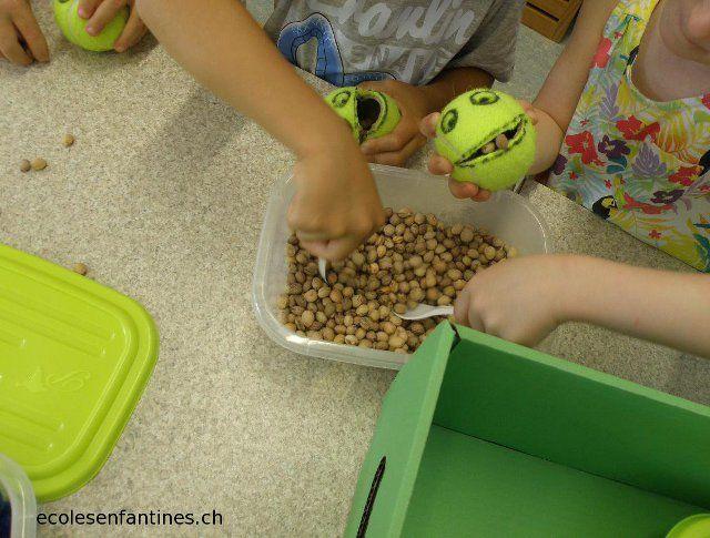 ecole enfantine maternelle enseignement motricité fine grenouille à nourrir balle tennis
