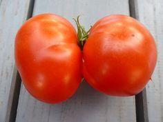 Tomaten pflanzen im Garten und auf dem Balkon, natürlich düngen und vor Krankheiten schützen: Tomaten pflanzen, aber richtig, Standort, natürliche Pflege, Düngu ...
