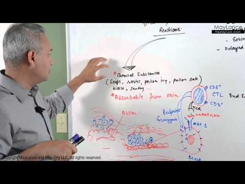 ▶ Immunology Lecture 16 - Type IV Hypersensitivity Reactions - YouTube