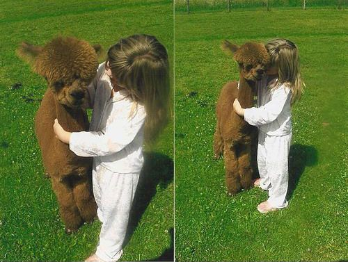 Just a girl with a baby alpaca....aww, I can see Violet doing this!!