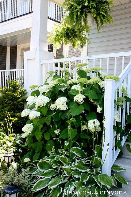 white hydrangeas & hostas
