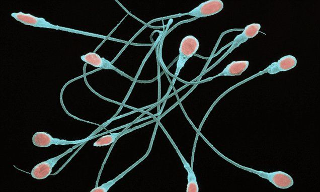 Sperm age calculator shows if a man can conceive | Daily Mail Online