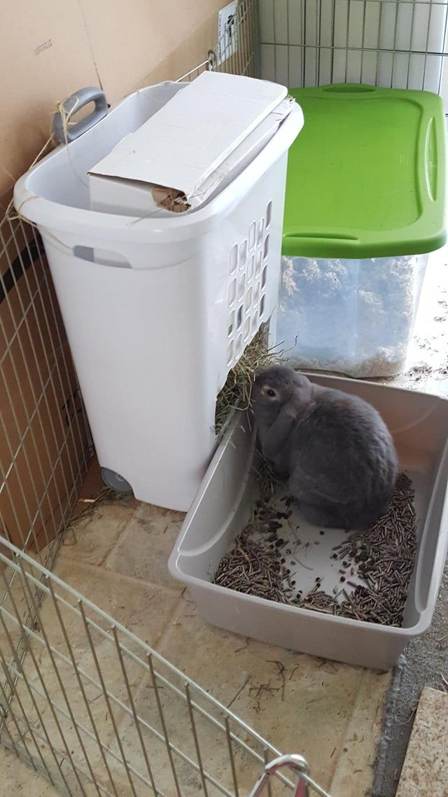rabbits rabbit feeder diy hay feeder