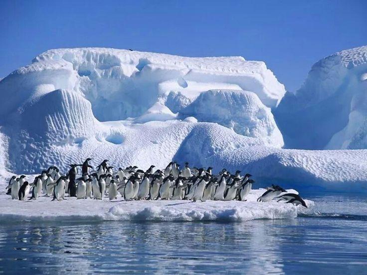 Grupo de pingüinos en un glaciar de la Antártida