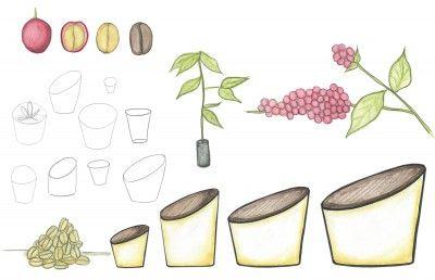 """En la actualidad muchas macetas son hechas de materiales no orgánicos. Esta propuesta que utiliza desechos naturales es un recipiente orgánico biodegradable que busca dar una segunda vida. """"Pergamino"""" son macetas que están hechas de cartón reciclado, pergamino y cera de abeja elaboradas de manera artesanal, adquiriendo características únicas del material."""