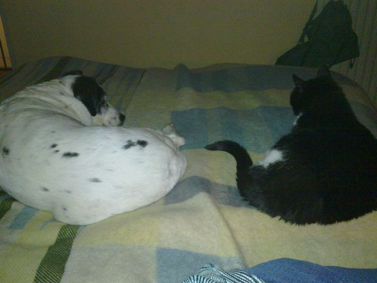 Romy & Boris zo vaak samen op het bed <3 / Romy & Boris, so many moments together on the bed <3