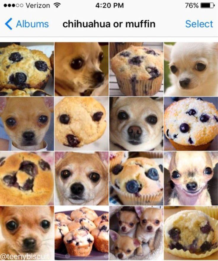 ¿Perro o muffin? El chiste que conquista las redes sociales   Un collage que mezcla imágenes de chihuahuas y magdalenas es el último fenómeno viral de internet