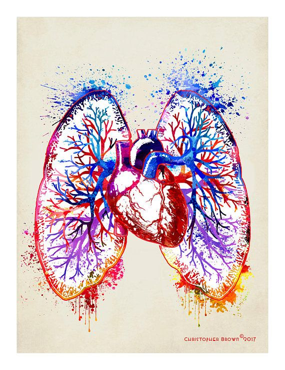 Heart And Lung Watercolor Lungs Art Anatomy Art Human Anatomy Art