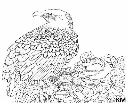 ausmalbilder falke  vogel malvorlagen malvorlagen tiere