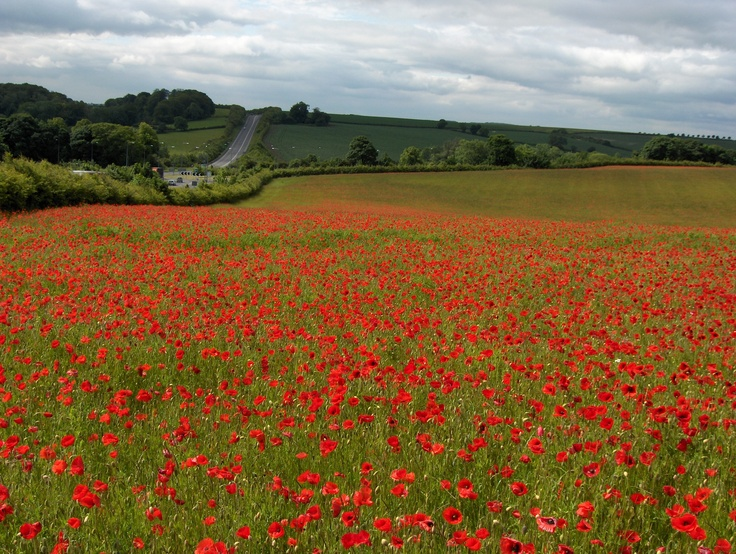 On the edge of an area of Outstanding Natural Beauty, Louth is surrounded by the rolling Lincolnshire Wolds.
