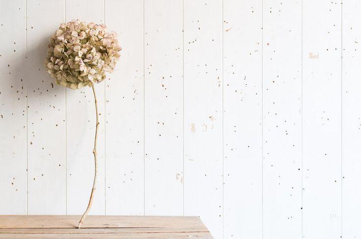 """Bird Songs  Flower Poems"" −RiLi, picture book, illustration, design ___ ""鳥の声  花の詩"" −リリ, 絵本, イラスト, デザイン ...... #exhibition #illustration #bird #poem #book #展覧会 #イラスト #鳥 #詩 #本"