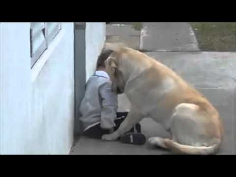 A child with Down syndrome and his labrador    this is the cutest video I think I've ever seen<3 so precious!