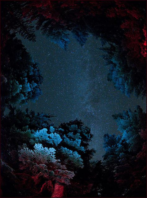 Andromedia and Milky Way with Light Painted Trees, Larch Mountain, Oregon